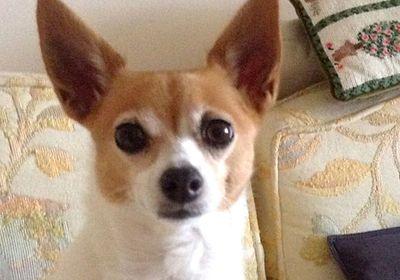 Mount Dora's New Canine Officials