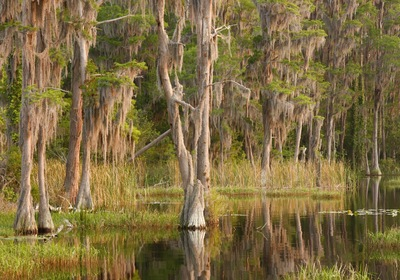 June Trivia: What Lake County Lake is Steeped in Florida History?