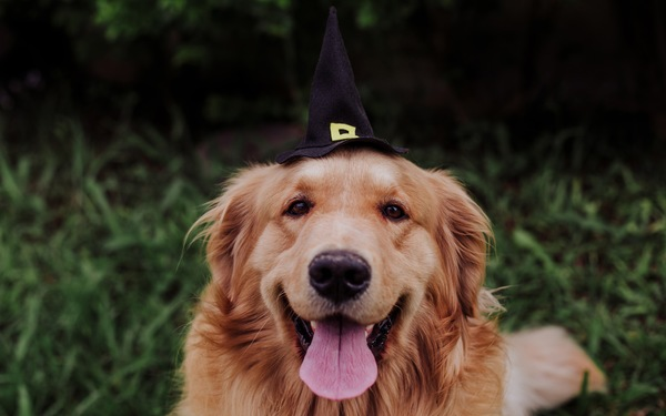 Celebrating a Pup-Friendly Halloween