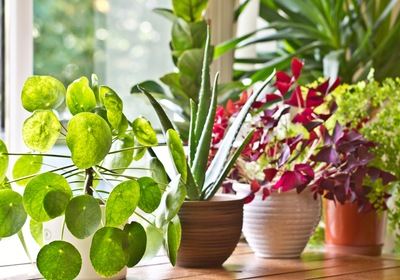 Lush and Lucky: Our Favorite Houseplants for Home