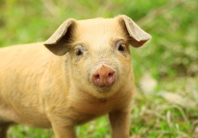 """March Trivia: Where Can You Find a """"Pig on the Pond"""" in Lake County?"""