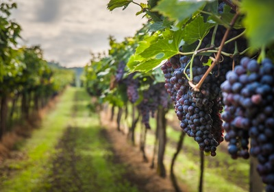 June Trivia: Where is Florida's Largest Premium Winery Located?